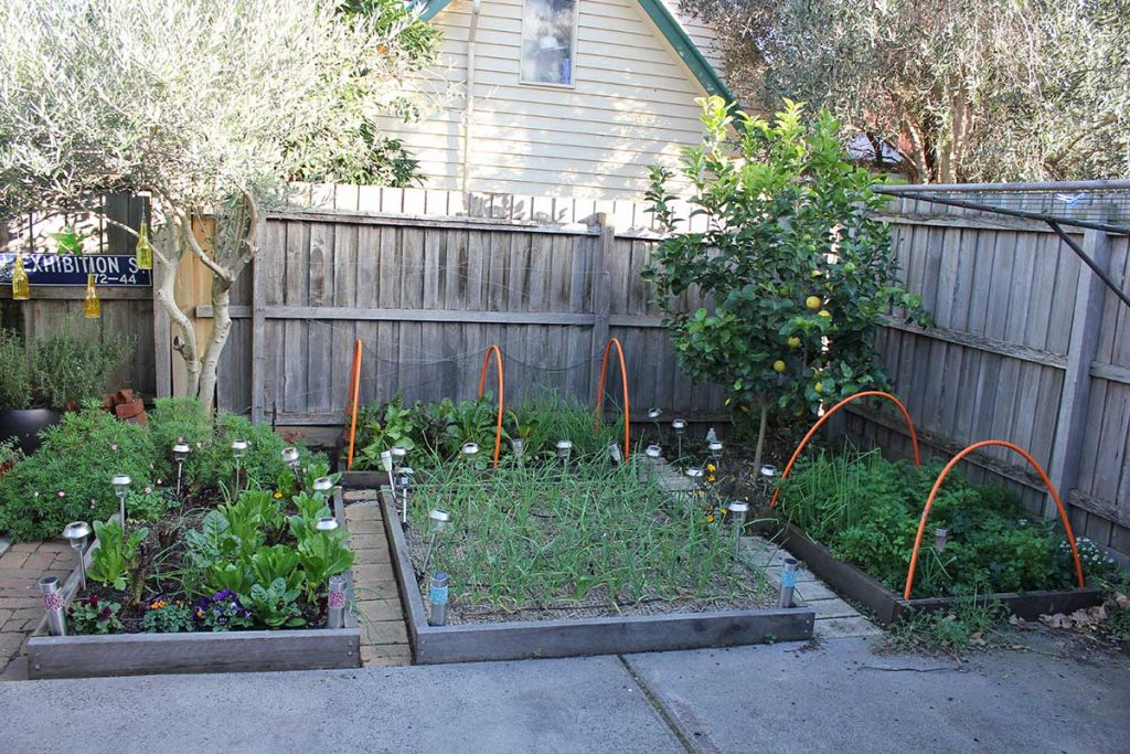 The Garden Is 13 Square Meters In Size In Melbourne Australia. The Size  Includes The Lemon Tree, Olive Tree And Path. The Total Size Of The Growing  Space In ...
