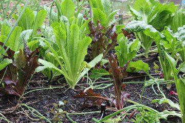 rainy-day-in-garden