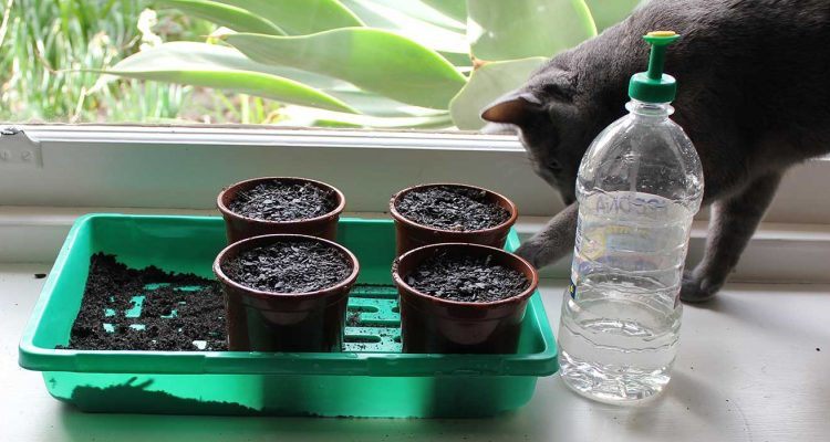 Sowing the first seeds