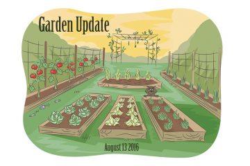Garden-update--blog2