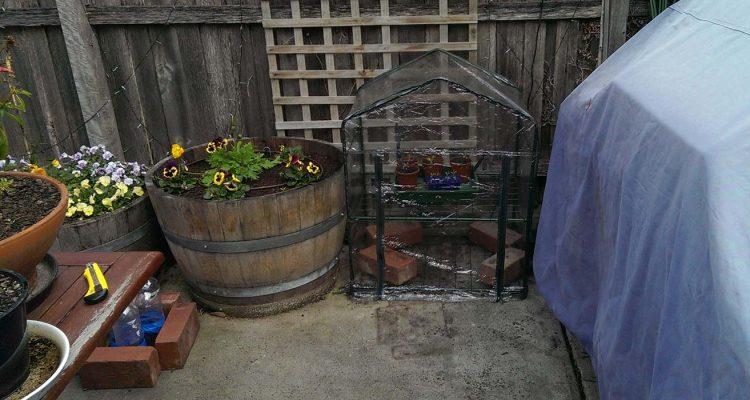 greenhouse-bk