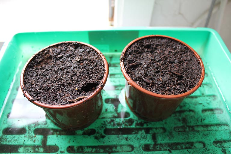 potted-and-warted