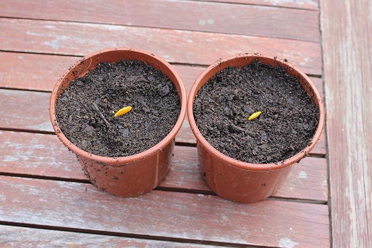 seeds-planted-sideways