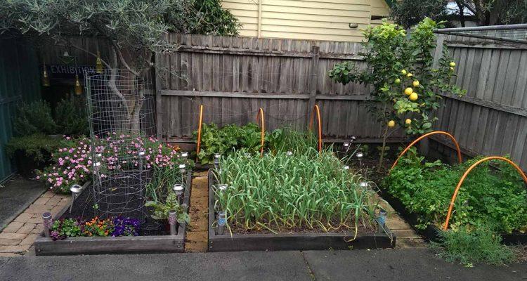 garden-update-15-9-16