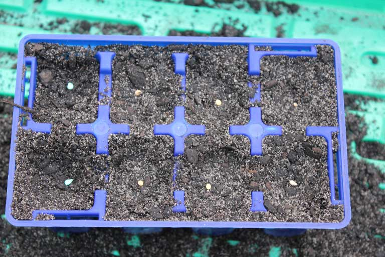 tomato-seeds-in-soil