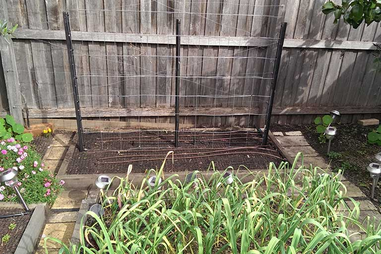 trellis-ready-for-cucumbers