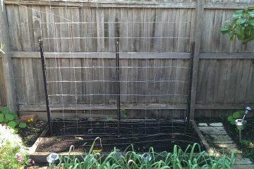 trellis-for-cucumbers