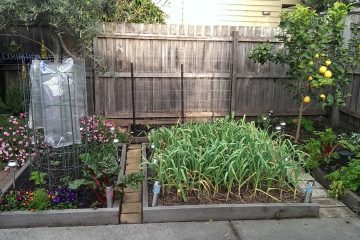 urban-garden5-october-2016