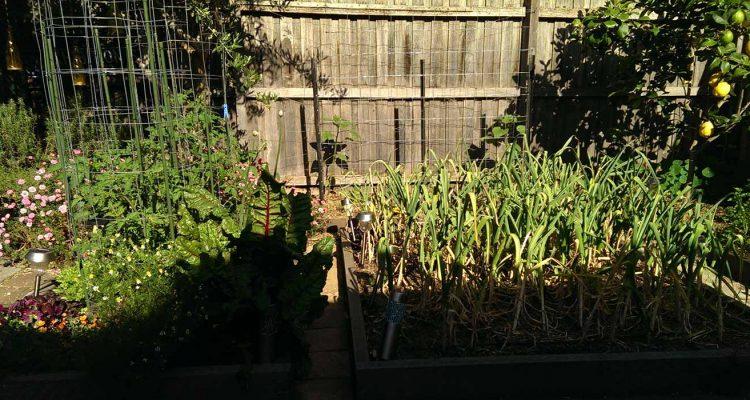 raised-bed-garden-11-nov-16