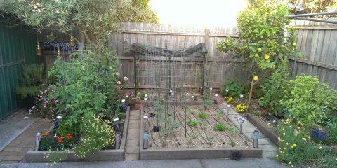 saltywombat-garden-27-11-16