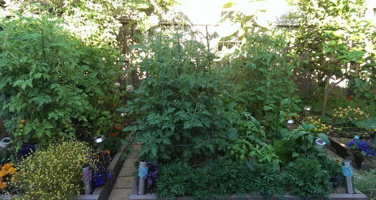 garden-update-24-12-16