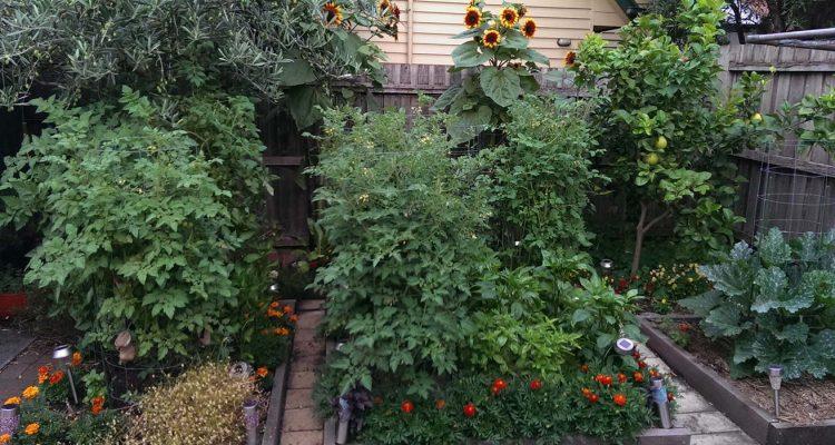 garden-update-6-1-17