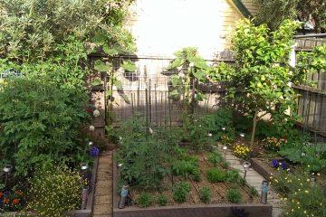 garden-update-7-12-16