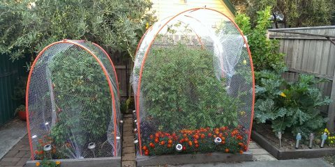 garden-update-7-feb-2017