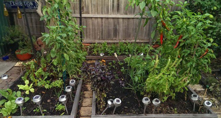 garden-update-may-2-2017