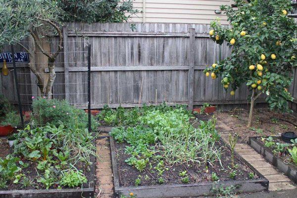 garden-21-6-17
