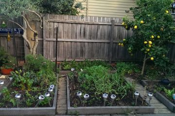 garden-5-6-17